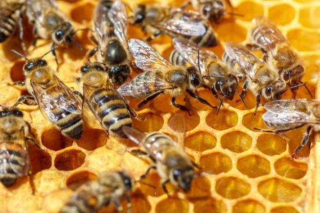 polen abelha fadiga crônica